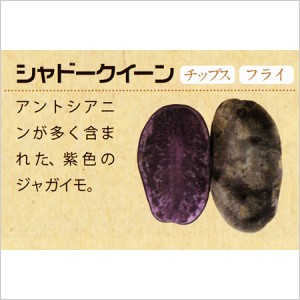 北海道十勝産 シャドークイーン5kgの写真2